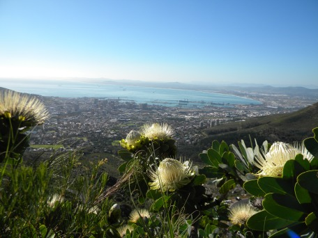 Table Mountain Proteas