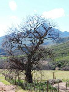 Karoo Hike (150)