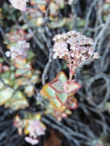 Plants and flowers of the Karoo