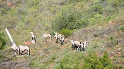 Karoo Hike (39)