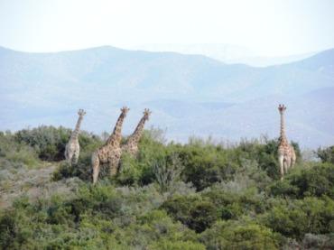 Karoo Hike (58)