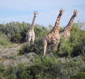 Karoo Hike (59)