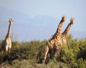 Karoo Hike (60)