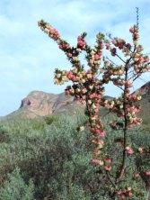 Karoo Hike (79)