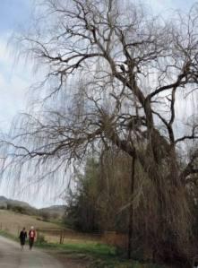 Karoo Hike (91)