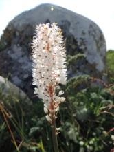 !Khwa ttu and Steenbok hiking trail (110)