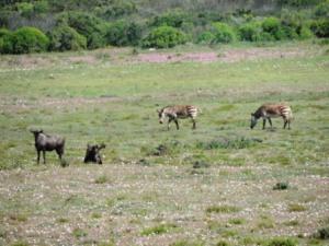 !Khwa ttu and Steenbok hiking trail (129)