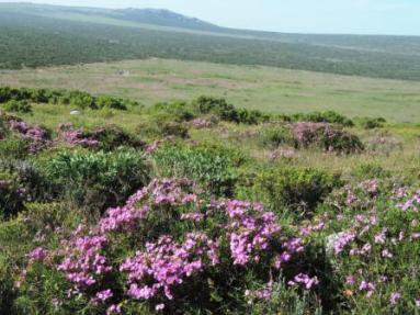 !Khwa ttu and Steenbok hiking trail (212)