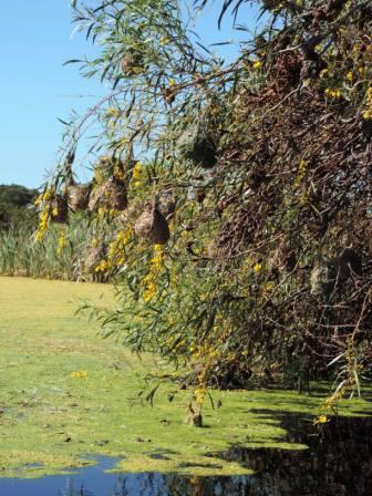 !Khwa ttu and Steenbok hiking trail (36)