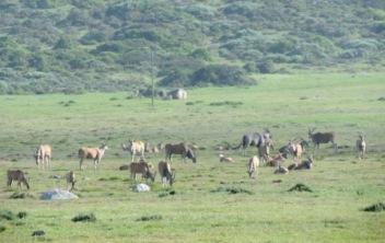 !Khwa ttu and Steenbok hiking trail (86)