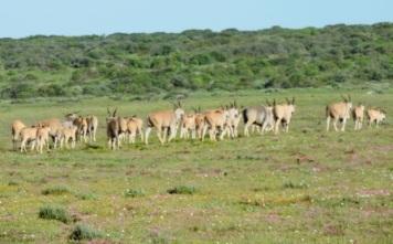 !Khwa ttu and Steenbok hiking trail (93)