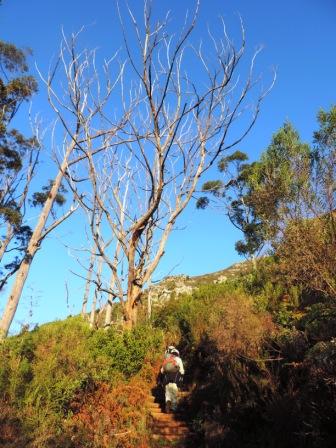 Cecelia Buttress Hike 011