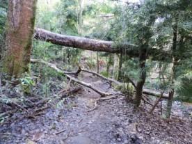 Cecelia Buttress Hike 137