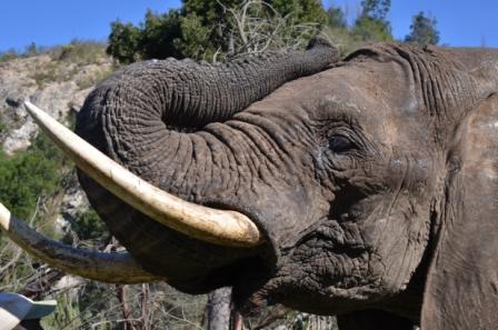 Botlierskop Private Game Reserve Elephants