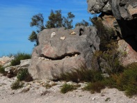 2 day Hottentots Holland Nature Reserve Hike 240
