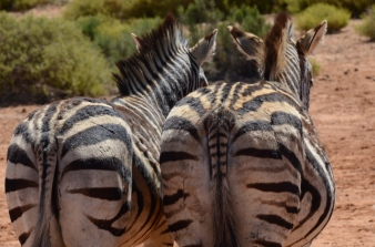 Aquila Game Reserve - Game Drive