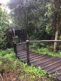 A rather slippery pathway from showers / braai to hut