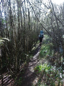 Amatola Hike Day 2 (39)
