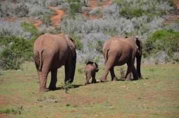 Addo Elephant National Park (31)