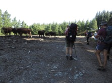 Amatola Hike Day 3 (134)