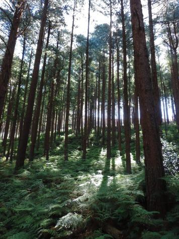 Amatola Hike Day 3 (146)