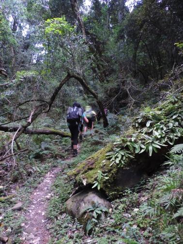 Amatola Hike Day 5 (6)
