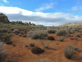Typical Karoo landscape
