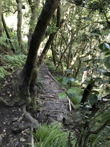 Down Skeleton Gorge
