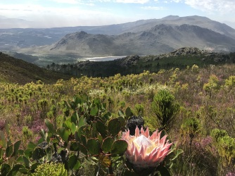 Hottentots Holland Trail