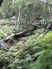 Grootvadersbosch Bushbuck Trail
