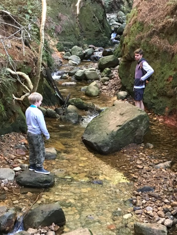 Newlands Forest with kids