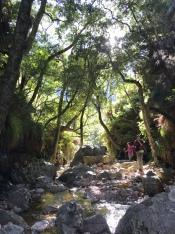 Jonkershoek Waterfall Trail