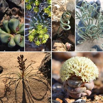 Plants of the Tankwa Karoo